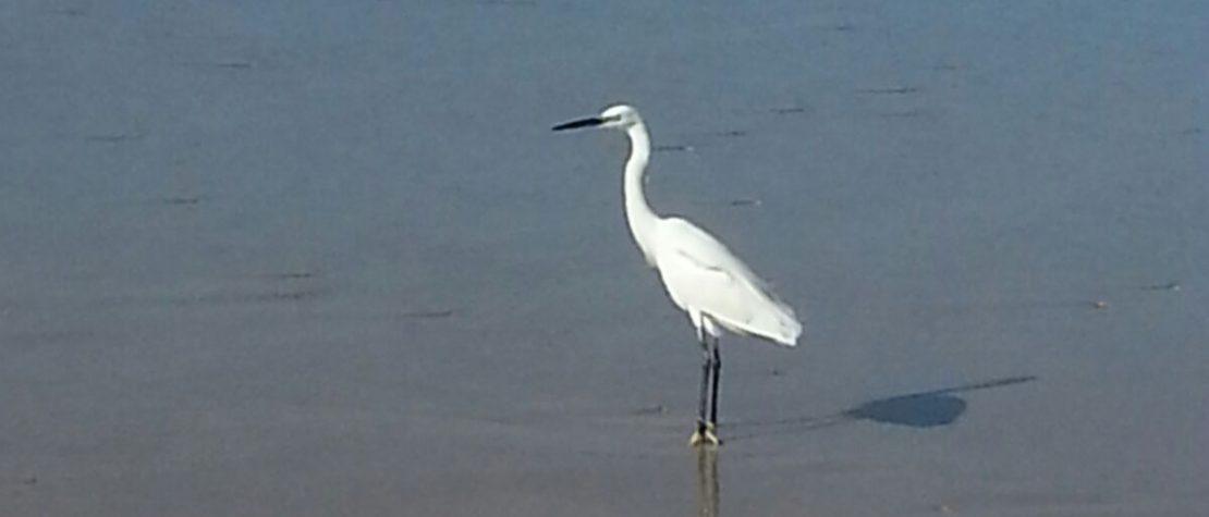 crane near the sea