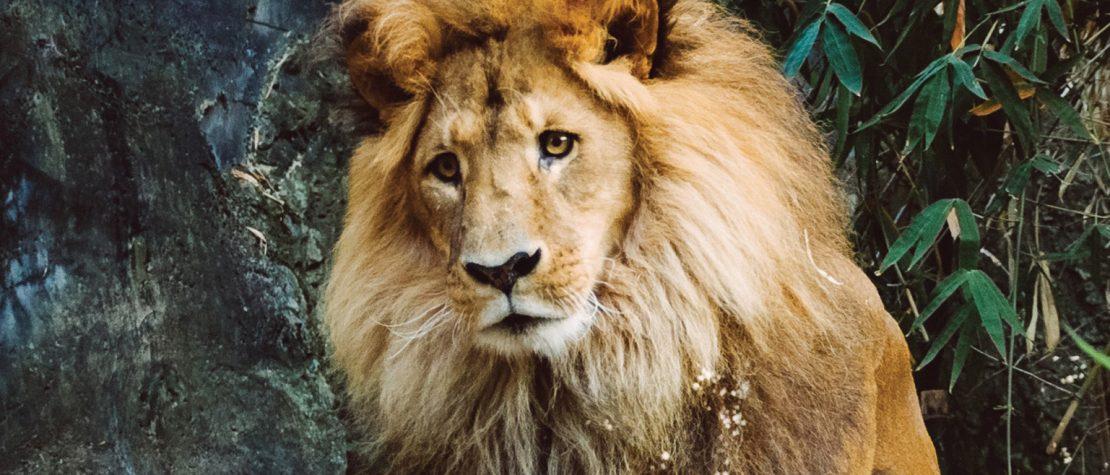 אריה - איך אתה רואה את עצמך במראה