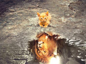 חתול מביט בהשתקפות שלו כאריה