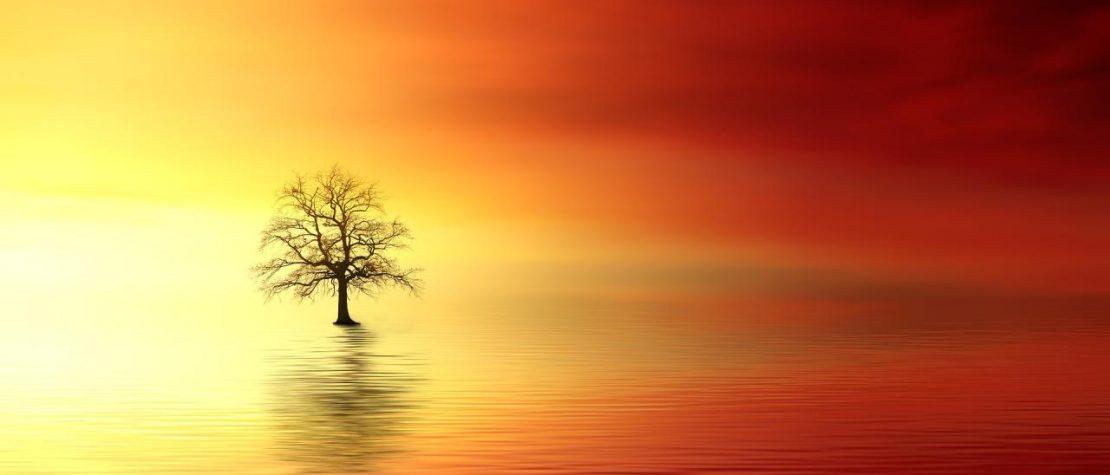 עץ בודד על פני מים