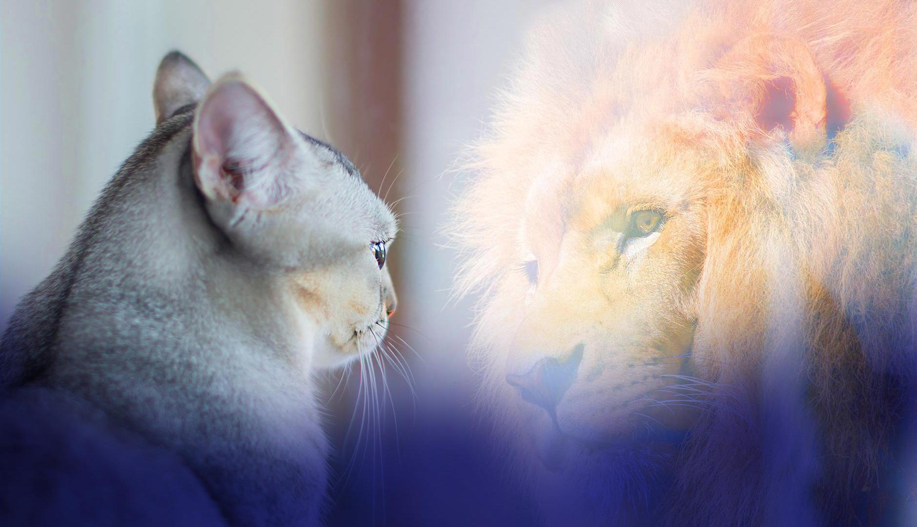 חתול מביט בראי וראוה את עצמו כארי